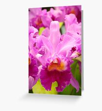 Pink Cattleya Orchids Greeting Card