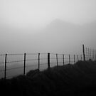 Misty Fence by Jared Brain