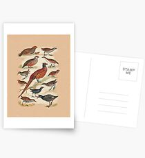 Pheasant and more Postcards