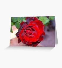 Climbing red rose Greeting Card