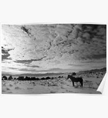 Lonesome Mustang Nevada Desert  Poster