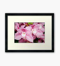 Pink Cymbidium Orchid Framed Print