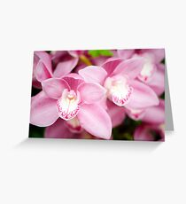Pink Cymbidium Orchid Greeting Card