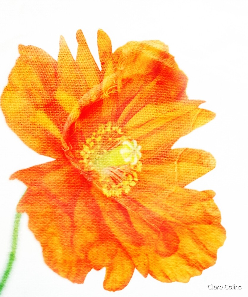 Ragtime Poppy by Clare Colins