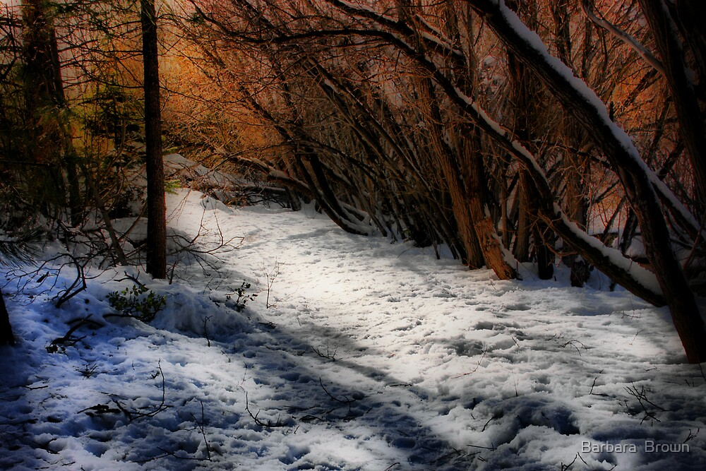 A Winter Walk by Barbara  Brown