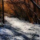 A Winter Walk by Barbara  Brown