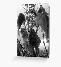 Dying leaves Greeting Card