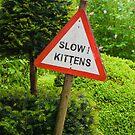 Slow Kittens! by Daniel Attema