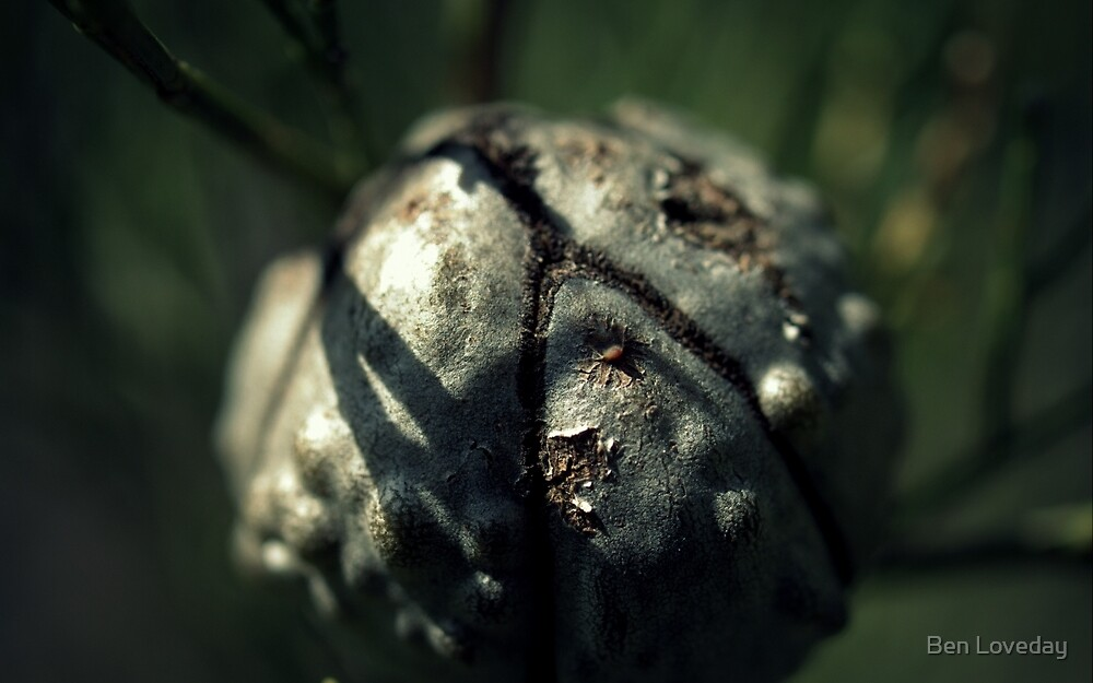 A Hard Nut To Crack by Ben Loveday