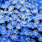 Blue Daisies by Oscar Gutierrez