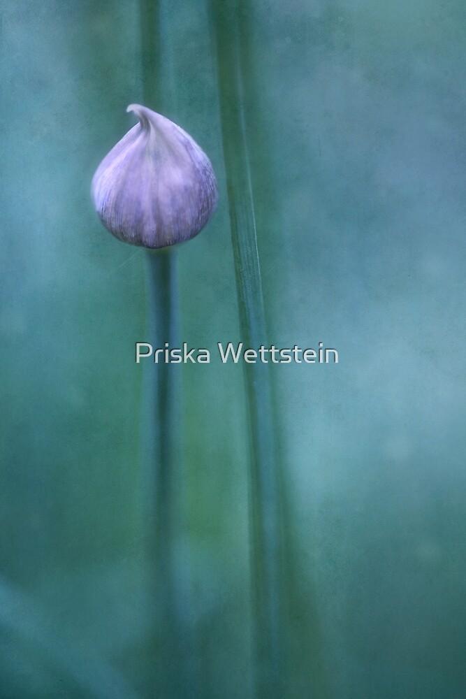 Testolina by Priska Wettstein