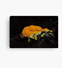 Dogs vomit slime mould Canvas Print