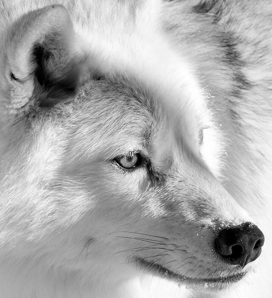 Eye of the Wolf by Bill Maynard