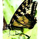 Butterfly by teresa731