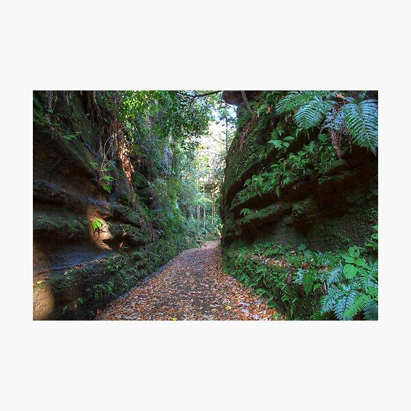 Road to Kamakura Photographic Print