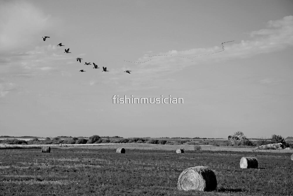 fall flight by fishinmusician