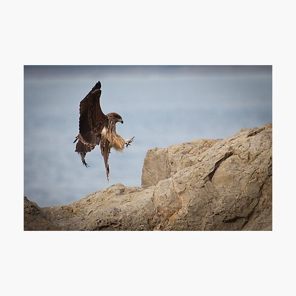 The Eagle is Landing Photographic Print