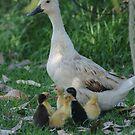 Little ducklings by trishringe