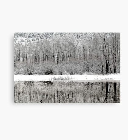 Winter Whites  Canvas Print