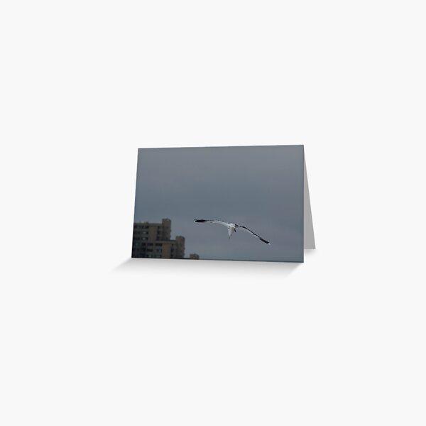 Gull Landing Greeting Card