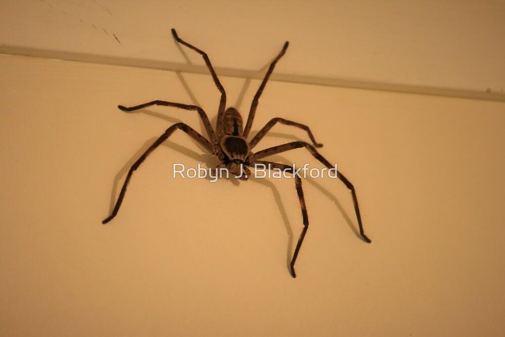 Quot Australian Huntsman Spider Quot By Aussiebushstick Redbubble