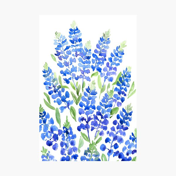 Watercolor Texas bluebells Photographic Print