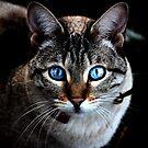 Blue Eyes 2 by StephanieHadley