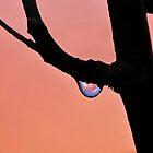 Dewy Sunrise by relayer51