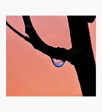 Dewy Sunrise Photographic Print