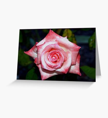 Marbled pink star-like rose Greeting Card