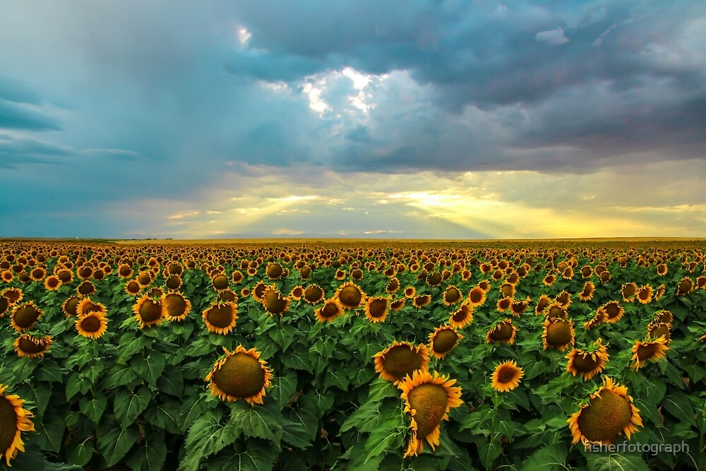 Sea of Sun Soakers by fisherfotograph