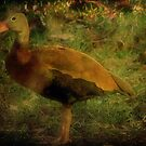 Black Bellied Whistling Duck by DottieDees