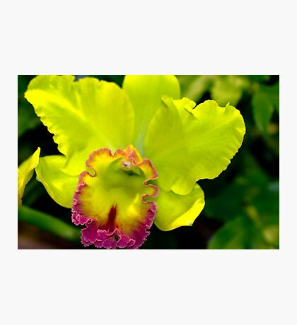 Orchid #4 Photographic Print
