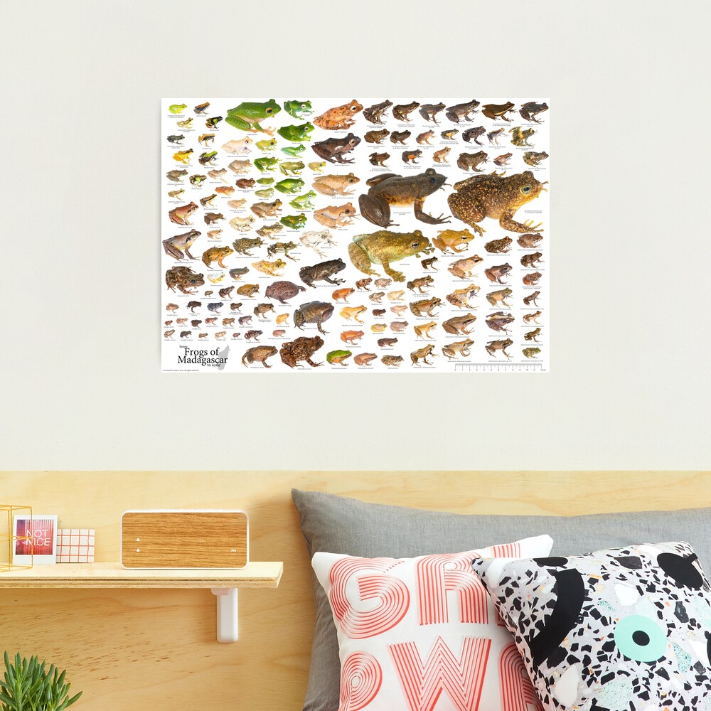 Some Frogs of Madagascar to Scale, Version 1.0 Photographic Print