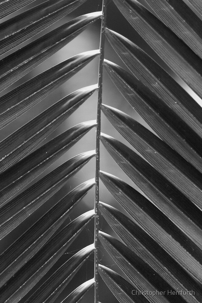 Palm Leaf 2 by Christopher Herrfurth