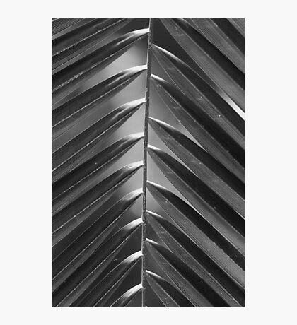 Palm Leaf 2 Photographic Print