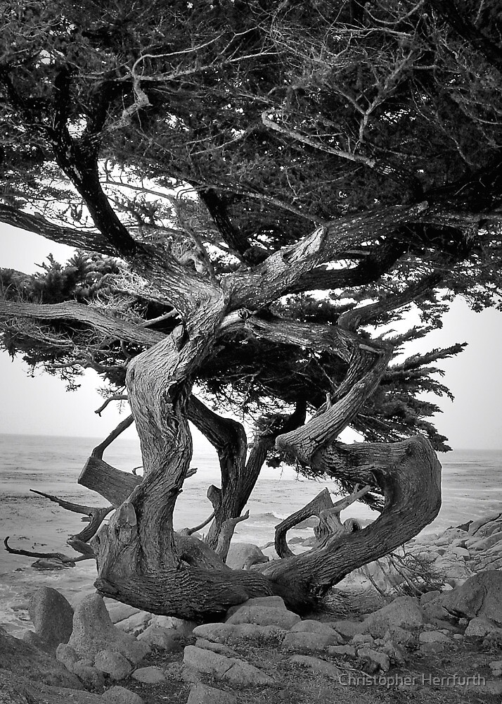 Bent Tree by Christopher Herrfurth