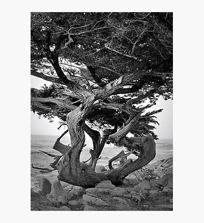 Bent Tree Photographic Print