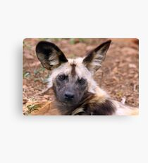 African Painted Dog Canvas Print