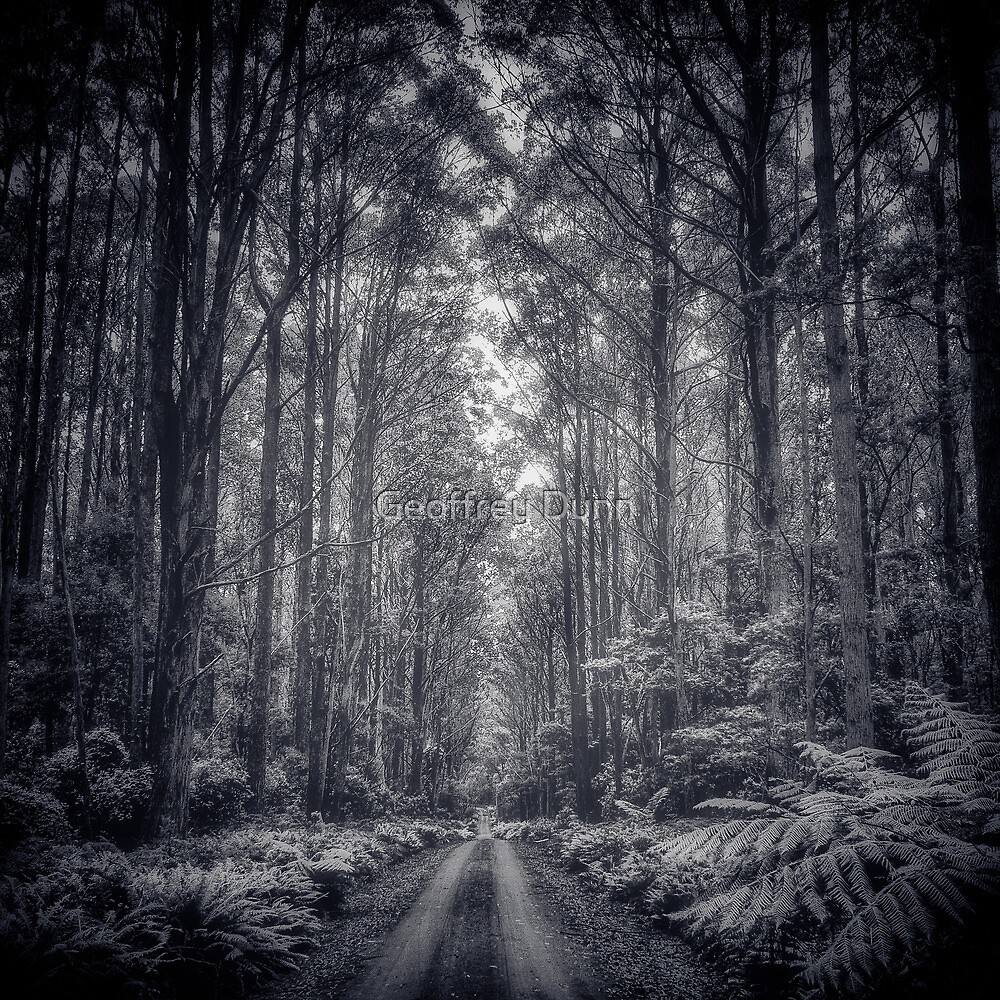 ...misty road, Monga NP... by Geoffrey Dunn