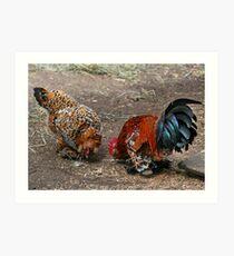 Free Range Chickens Art Print