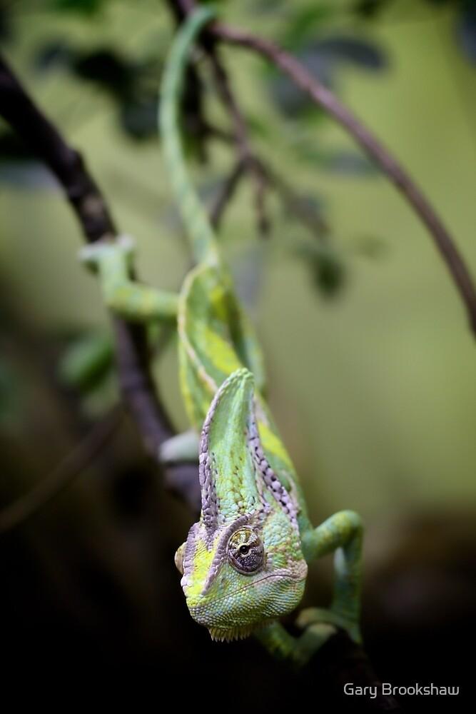 Chameleon by Gary Brookshaw
