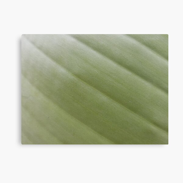 Green palm pattern Canvas Print