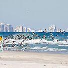 Terns On The Move by Deborah  Benoit