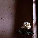 Rose by minako375