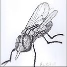 housefly by max motmans
