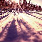 Cold purple by Rick Senley