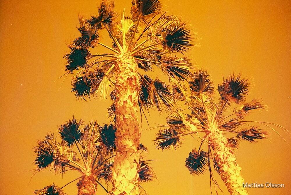 Redscale Palmtrees by Mattias Olsson