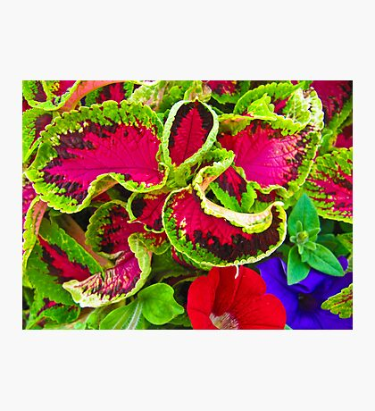 As nature intended Photographic Print