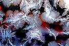 Jack Frost - Dunrobin Ontario by Debbie Pinard